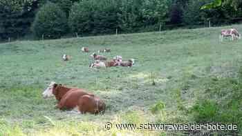Bad Wildbad: Tierischer Besuch im Kurpark