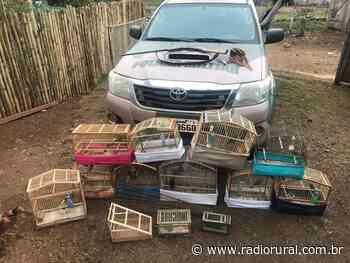Flagra de pássaros em cativeiro em Ipira - Rádio Rural AM 840 - Rádio Rural