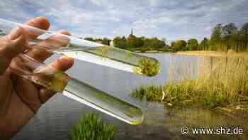 Bordesholm: Im See blühen schon wieder die Algen | shz.de - shz.de