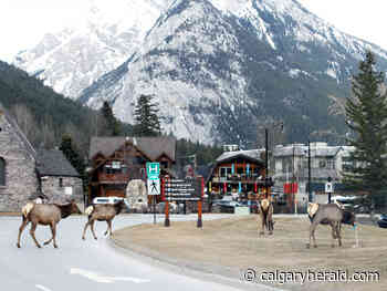 Multiple wildlife advisories prompts message of awareness, caution for Banff visitors - Calgary Herald