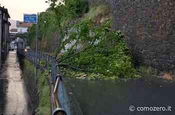 Maltempo in provincia di Como: albero caduto a Moltrasio, chiusa e poi riaperta la Regina Vecchia - ComoZero