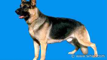 First COVID-19 case in a dog confirmed by USDA