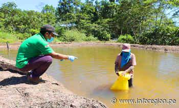 Satipo: Siembran 25 mil peces amazónicos para fortalecer seguridad alimentaria - INFOREGION