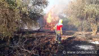Agropoli: il sindaco Coppola firma l'ordinanza per la prevenzione e la lotta contro gli incendi - ondanews