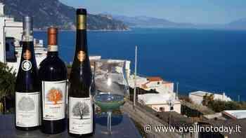 Il vino irpino per i salernitani, l'omaggio della Cantina Bellaria - AvellinoToday