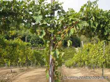 L'Azienda vinicola Bellaria Da Positano e Praiano a Ravello per la Festa della Repubblica - Positanonews