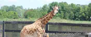 Le Parc Oméga et le Parc Safari mécontents de ne pouvoir rouvrir