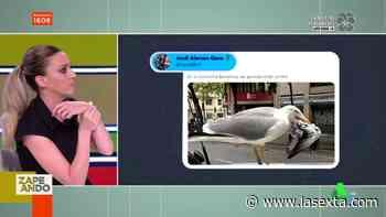 El misterio de las gaviotas asesinas que comen cabezas de palomas: ¿se han vuelto más agresivas por el confinamiento? - LaSexta