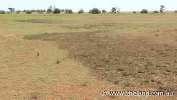 Plague locust threat this year is 'minimal'