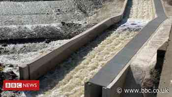 River Don salmon return for 'first time in 200 years'