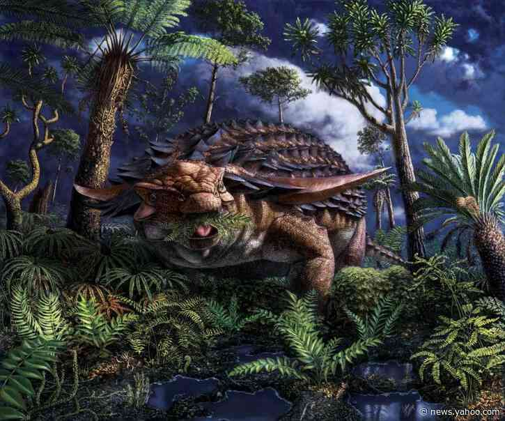 Fossilized stomach contents show armored dinosaur's leafy last meal