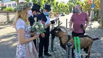 Lambrechter Geißbock vorerst noch nicht in Deidesheim versteigert - SWR