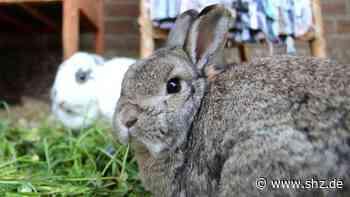 Mildstedt: Wegen Corona: Kaninchenhilfe NF ist jetzt selbst in Not   shz.de - shz.de