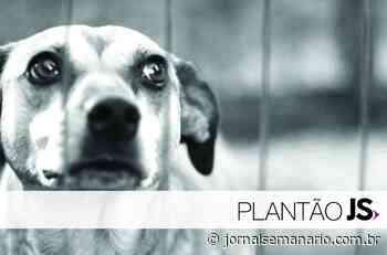 Animais são encontrados mortos no interior de Carlos Barbosa - jornalsemanario.com.br