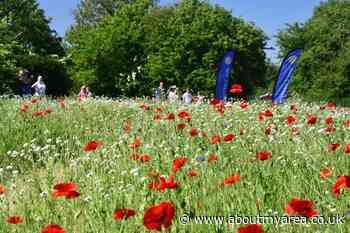 Rotary E-Club Community Wildflower Meadow - AboutMyArea