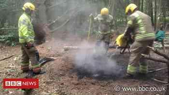 Coronavirus: Havannah Reserve vandals chop trees, set fires and leave litter - BBC News