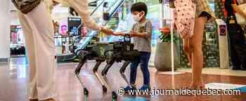 [EN IMAGES] Un chien-robot distribue du gel pour les mains dans un centre commercial de Bangkok