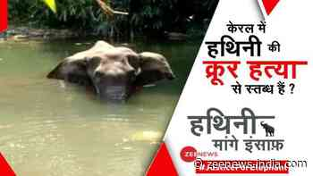 #JusticeForElephant: Join ZEE NEWS campaign to bring Kerala elephant`s barbaric killers to book
