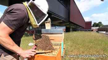 Les abeilles du tribunal d'Avesnes-sur-Helpe font le b(u)zz - La Voix du Nord