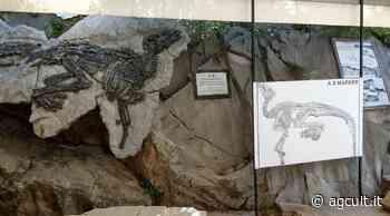 Trieste, De Carlo (M5S): Mibact intervenga per promozione sito paleontologico di Duino-Aurisina - AgCult