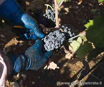 Tutela del Primitivo di Manduria, la Regione Puglia difende la produzione - Grottaglie in rete