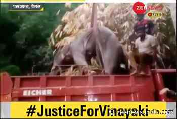 #JusticeForVinayaki: SIT to probe pregnant elephant`s death amid public outrage; Kerala CM says justice will prevail