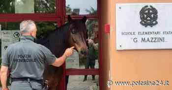 Cavallo in fuga, recuperato dalla Polizia provinciale - La Voce di Rovigo - La voce di Rovigo