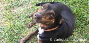 Família procura por cãozinho desaparecido no bairro Santos Dumont - Diário de Canoas
