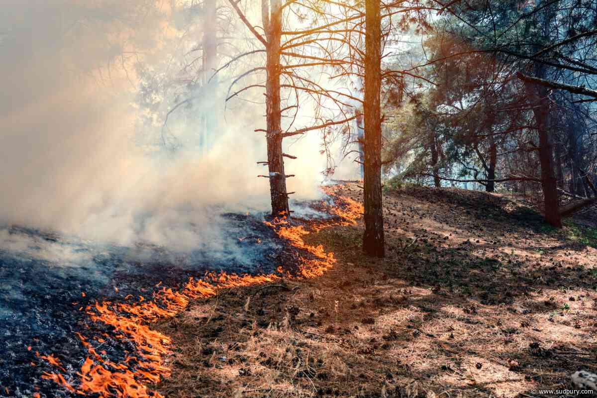 Only one active forest fire in the Northeast region today