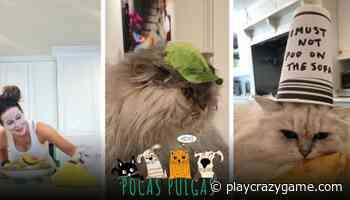 Kate Beckinsale took their cats up in this quarantine - Play Crazy Game