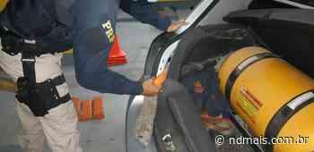 Homem é preso com 25 quilos de maconha em Rio Negrinho - ND - Notícias
