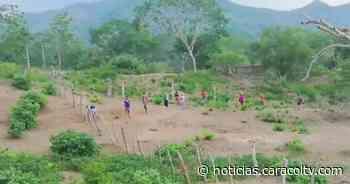 Pasando cercas y subiendo montañas: estudiantes toman clases virtuales en un cerro - Noticias Caracol