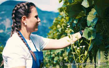 Südtiroler Weine reifen auch in Krisenzeiten - unsertirol24