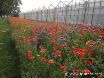 New UK tomatoes boost biodiversity