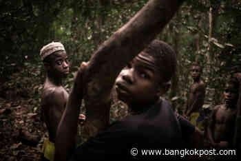 Last redoubt: Pygmies return to forest to isolate against coronavirus - Bangkok Post