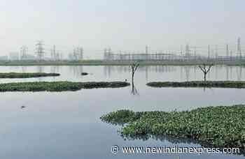 Only 35 resident terrestrial bird species seen in Garhi Mandu forest - The New Indian Express
