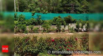 UP: Soon, Miyawaki mini forest at Kanha Upvan - Times of India