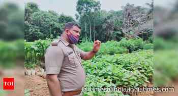 Sapling survival rate of 65% gives boost to enhancing area under forest in DK - Times of India