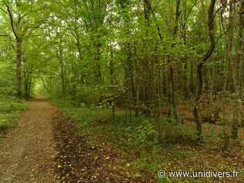 Découverte de la Nature en forêt de Rougeau Saint Pierre du Perray D 446 Parrking en face De BABYLAND Morsang-sur-Seine - Unidivers