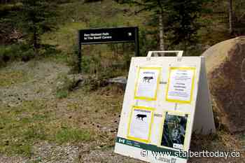 Beyond Local: Parks Canada patrolling for coyote den in Banff - St. Albert Today