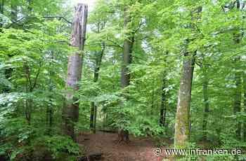 Was wir aus dem Hohen Buchenen Wald?