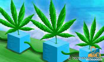 Uruguay Cannabis Firm Adopts Aeternity (AE) Blockchain for Cannabis Tracking - btcmanager.com