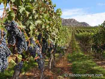 Anthony Gismondi: Wine business needs to pivot for consumers