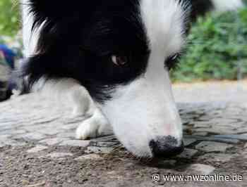 Tierhasser In Barssel?: Schon wieder ein Hund vergiftet - nwzonline.de