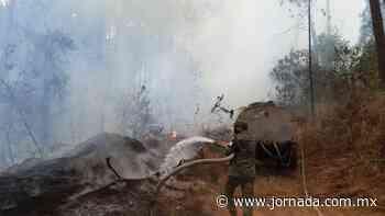 Comuneros buscan controlar incendio forestal en Uruapan - Estados - La Jornada