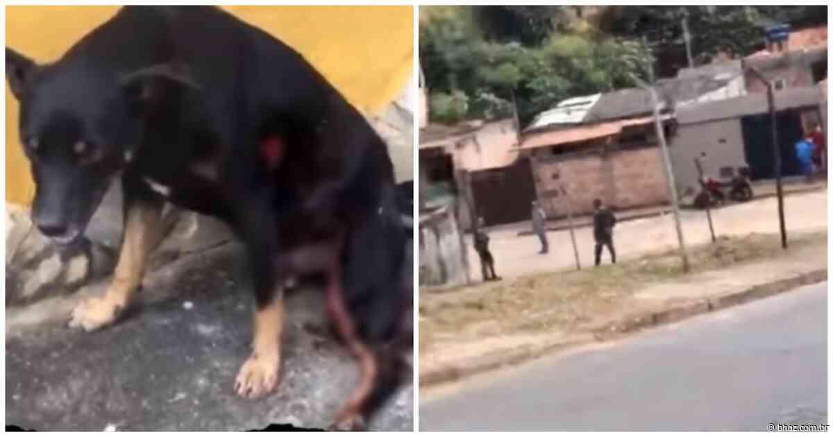 PM atira em cachorro durante ação em Contagem e vídeo gera revolta: 'Muita crueldade' - BHAZ