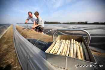 Koop asperges uit Kinrooi - Het Belang van Limburg