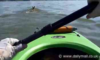 Kayakers rescue a deer found swimming in the middle of Lake Erie - Daily Mail