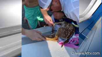 VIDEO: Family rescues drowning baby deer from East Texas lake - KLTV