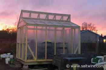 Glace Bay Food Bank's greenhouse is back thanks to volunteers, donation - SaltWire Network